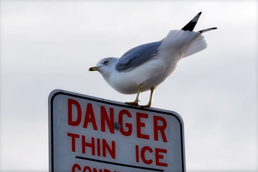 Who Knew Seagulls Could Read
